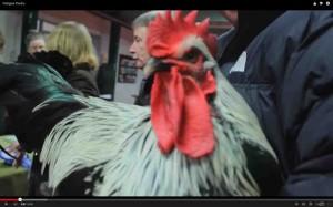Pedigree Poultry